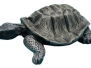 Rrane tartarughe e lumache